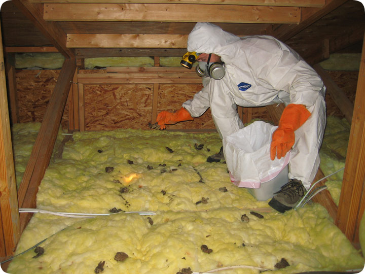 Attic Restoration Cleanup And Decontamination From