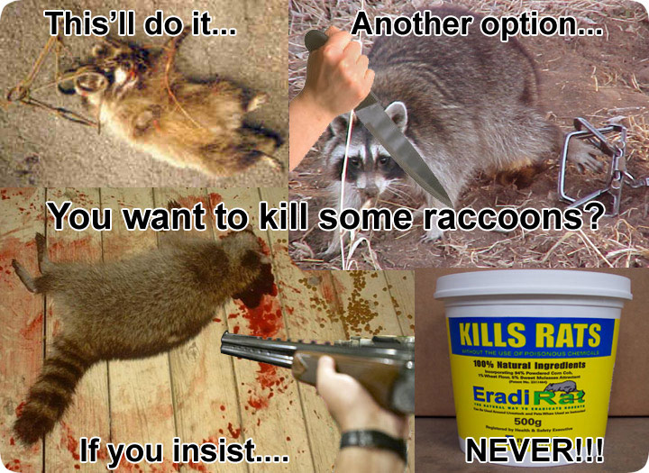 How To Kill Raccoons Poisons Shooting Lethal Grip